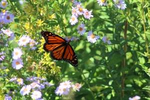 pollinator-1