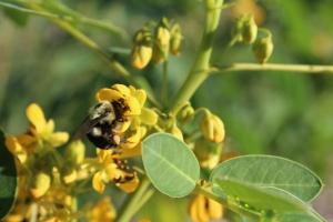 pollinator-2